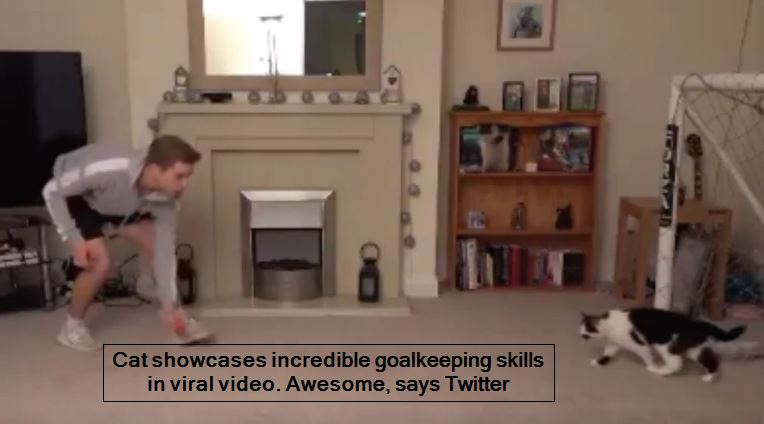 Cat showcases incredible goalkeeping skills in viral video. Awesome, says Twitte