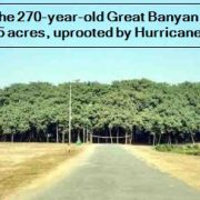 Howrah - The 270-year-old Great Banyan tree, spread over 5 acres, uprooted by Hurricane Amfan