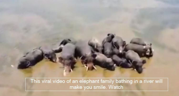This viral video of an elephant family bathing in a river will make you smile. Watch