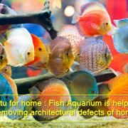 Vastu for home -Fish Aquarium is helpful in removing architectural defects of home