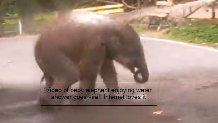 viral video - Video of baby elephant enjoying water shower goes viral. Internet loves it - Tre