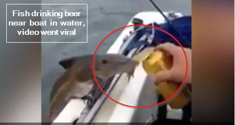 Fish drinking beer near boat in water, video went viral