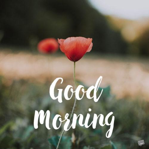 Good-Morning-poppy-flower-
