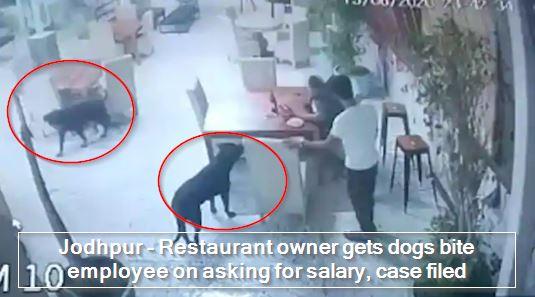 Jodhpur - Restaurant owner gets dogs bite employee on asking for salary, case filed