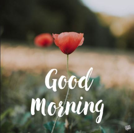 Good Morning Messages Wishes Quotes The State