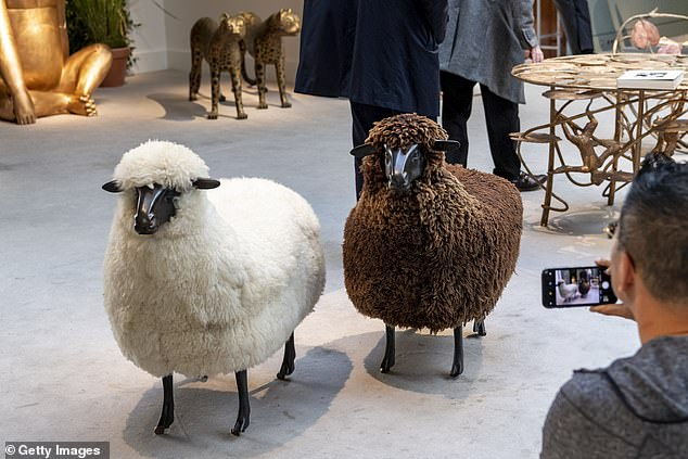 Baa-gains: Some of the sheep have already been purchased, according to the publication. Seen here on display in 2019