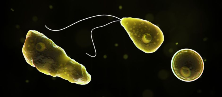 8 Texas Cities on Alert: Brain-eating Amoeba Found in Water Supply   The NY Journal