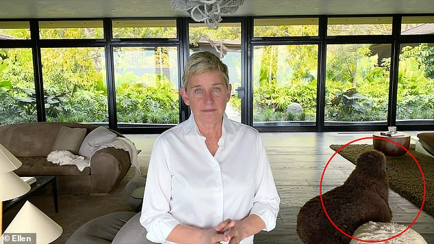 Everything must go: Ellen DeGeneres, 62, is