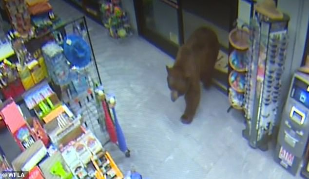 Hungry bears have been breaking into a California gas station and a nearby supermarket and helping themselves to candy and crackers