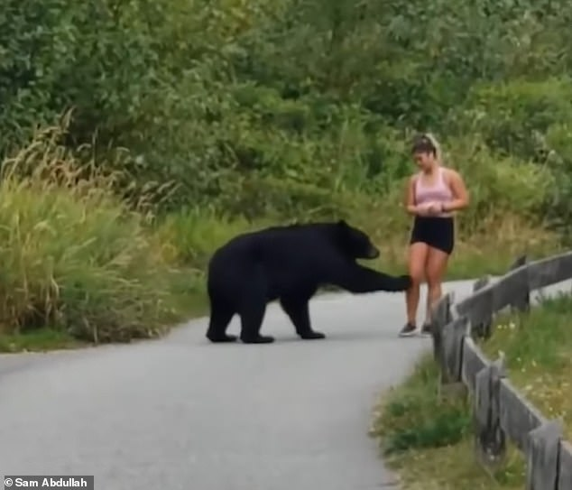 Heart-stopping video shows the moment a woman came face-to-face with a black bear while out jogging on a popular trail in British Columbia, Canada on Saturday