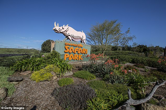 San Diego authorities are searching for a woman who was exposed to a rabid bat at San Diego Zoo Safari Park near Escondido (pictured) after it flew around her, potentially infecting her and one other visitor