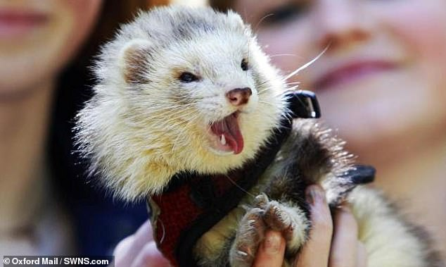 Scientists 'amazed' after trial of artificial solution killed virus in 96% of infected ferrets
