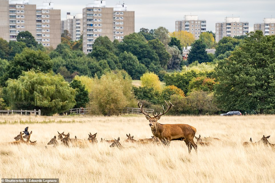 The London wildlife line-up includes red and fallow deer, many of which live in Richmond Park (pictured)