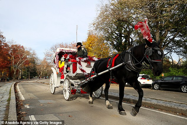 Pictured:A carriage is seen during winter season at the Central Park in New York on November 23, 2019 - just two months before the first COVID-19 case was confirmed in the city