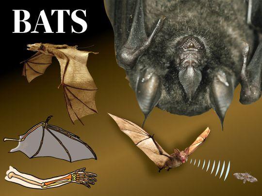 Bats: Smoke them out, nuke them, or love them?