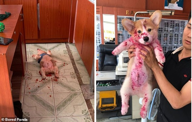 Oh no! This adorable little dog created quite the mess when raiding the food cupboard at an undisclosed location