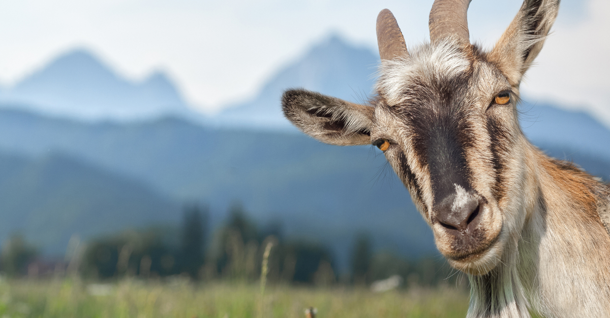 Why Satan Shows Up As a Goat in Scripture