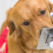 How can a dog detect if you have coronavirus | The NY Journal