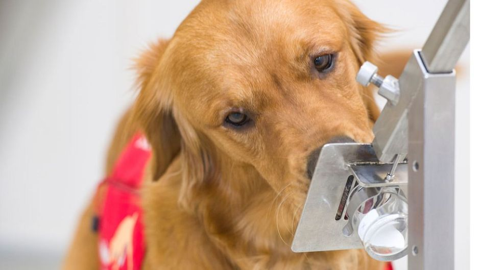 How can a dog detect if you have coronavirus   The NY Journal