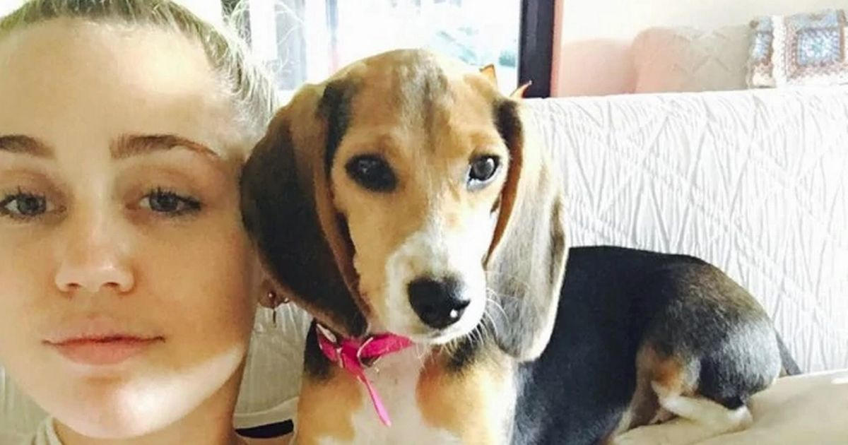 Miley Cyrus's pet dog violently electrocuted on set of The Voice