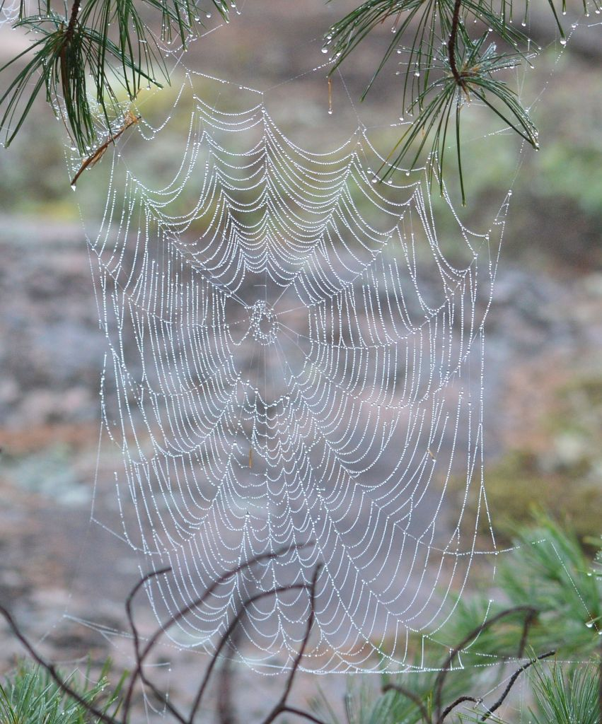 Creepy spider web found in Missouri looks big enough to 'catch' a human   The NY Journal