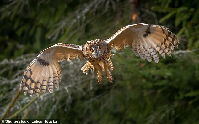 Flight: Bird wings act as an 'automatic suspension' which soak up turbulence