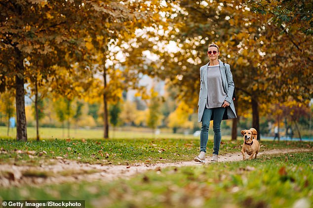 Law firm Joseph Hage Aaronson offers £30,000 for dog walker in job ad
