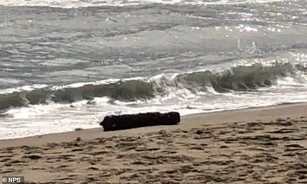 Moment WWII-era bomb that washed up on North Carolina beach is detonated by US Navy
