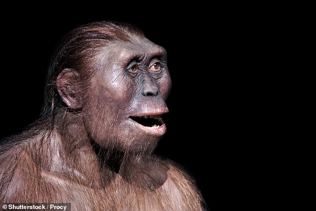 Our primate ancestors developed capacity for language, scientists say