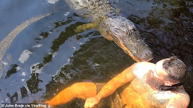 Scary moment Elvis the alligator takes a 'nibble' at Florida man's shoulder