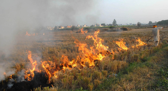 Stubble-burning: President promulgates ordinance to deal with air pollution in Delhi-NCR