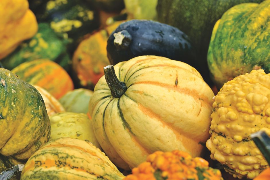 The shopping list for this fall, foods to be stronger and healthier than ever | The NY Journal