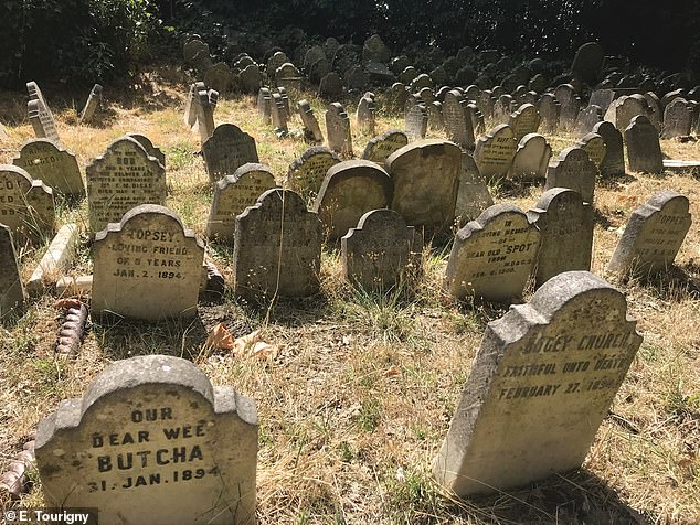 Victorian pet cemeteries reveal rise of belief in a pet afterlife