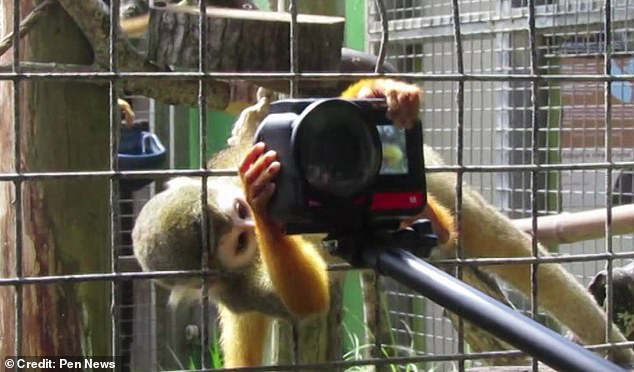 A visitor to Newquay Zoo in Cornwall had a tug of war with a monkey after the curious creature made a grab for his camera