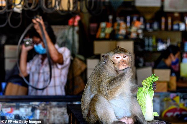 Costco has stopped selling coconut products from Thailand after it emerged some products used slave monkey labour to harvest the fruit. Pictured: A macaque eats a piece of Chinese cabbage outside a shop in Lopburi, Bangkok