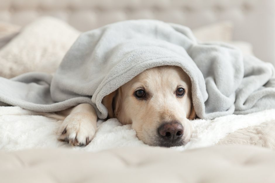 How to prevent your dog from getting the flu | The NY Journal