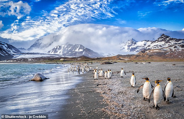 South Georgia island is home to penguins and seals, whose foraging routes could be disrupted if the A-68a iceberg grounds off its coast [File photo]