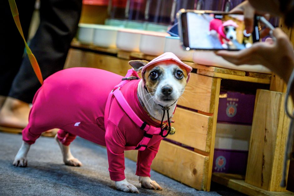 Which department store offers pajamas for the whole family and for your dog from $ 5 dollars | The NY Journal
