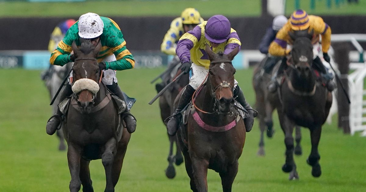 Trainer Paul Nicholls' lowdown on Cheltenham runners