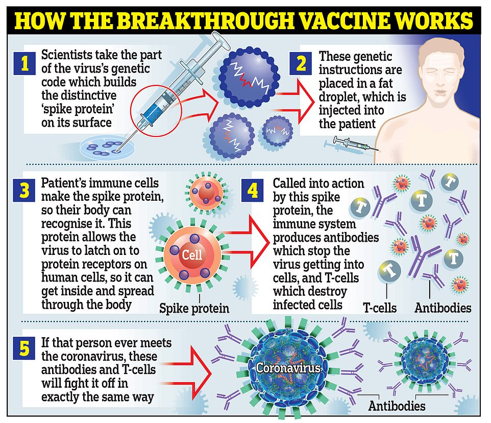 Moderna's vaccine works in the same way as the one developed by Pfizer and BioNTech, by using genetic material called RNA from the coronavirus to trick the body into making the 'spike' proteins that the virus uses to latch onto cells inside the body