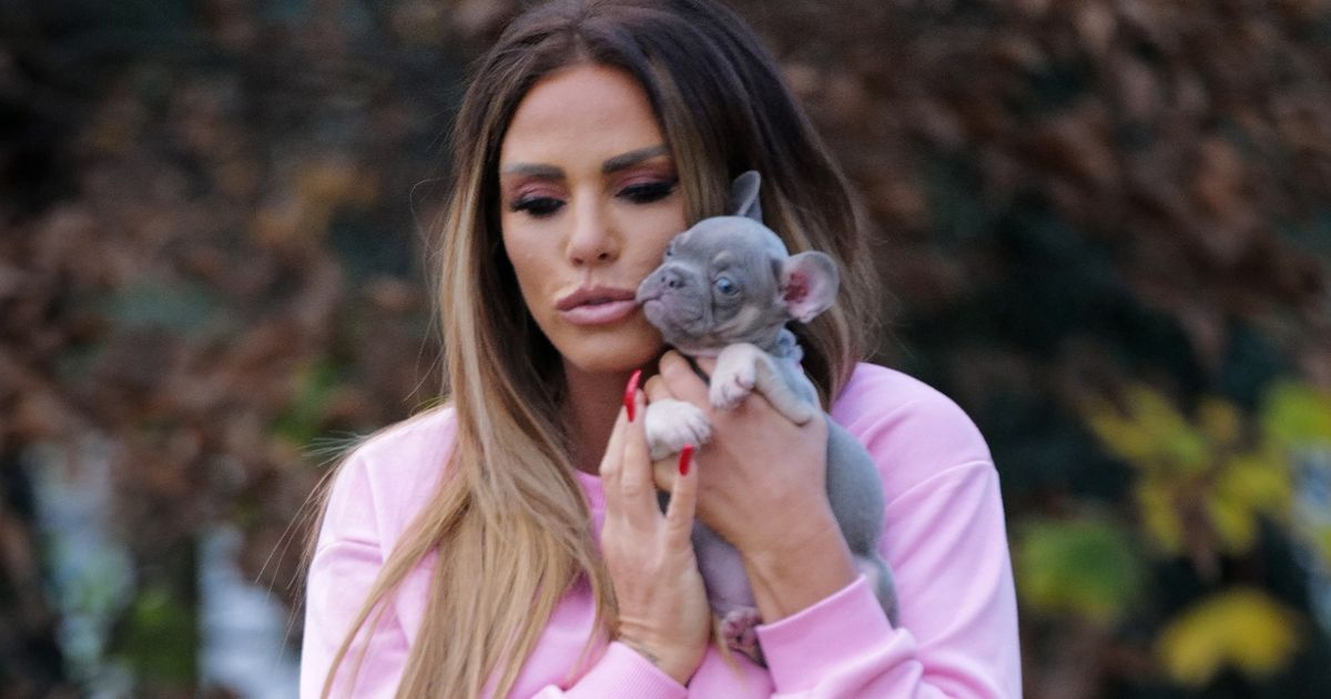 Katie Price introduces cute new puppy months after French Bulldog's tragic death