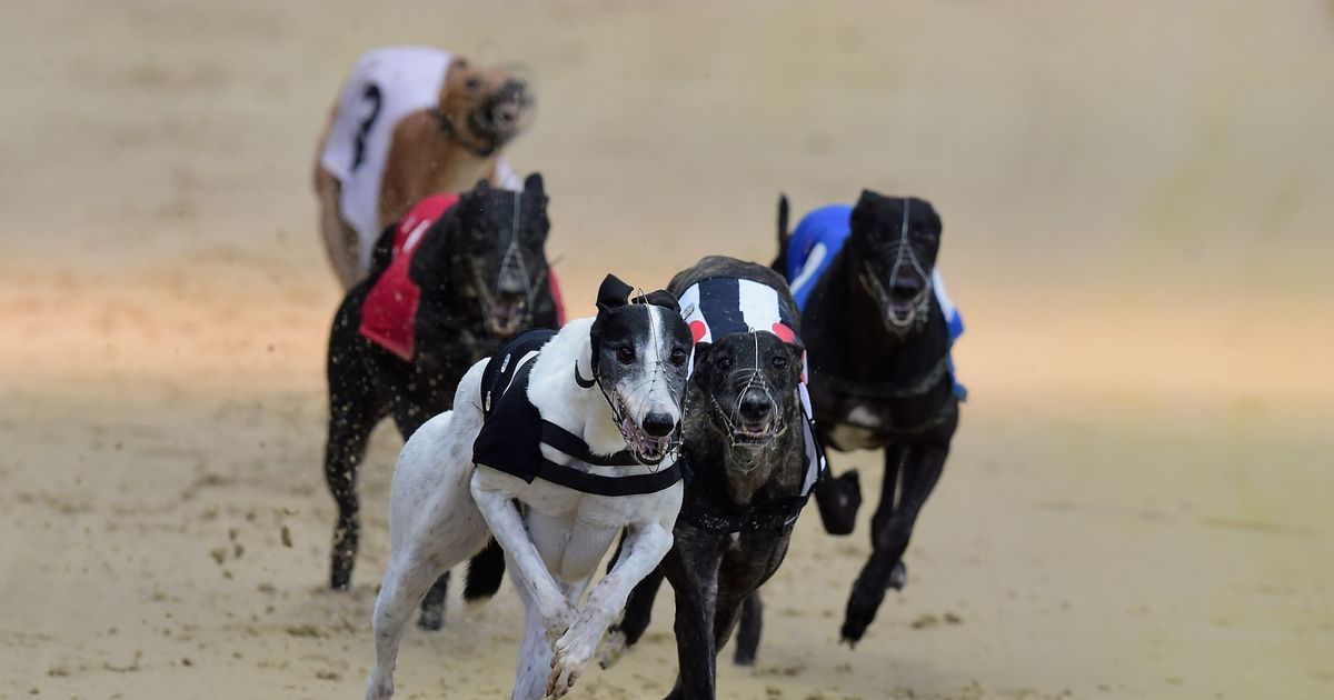 Best greyhound racing tips for Friday's Romford meeting