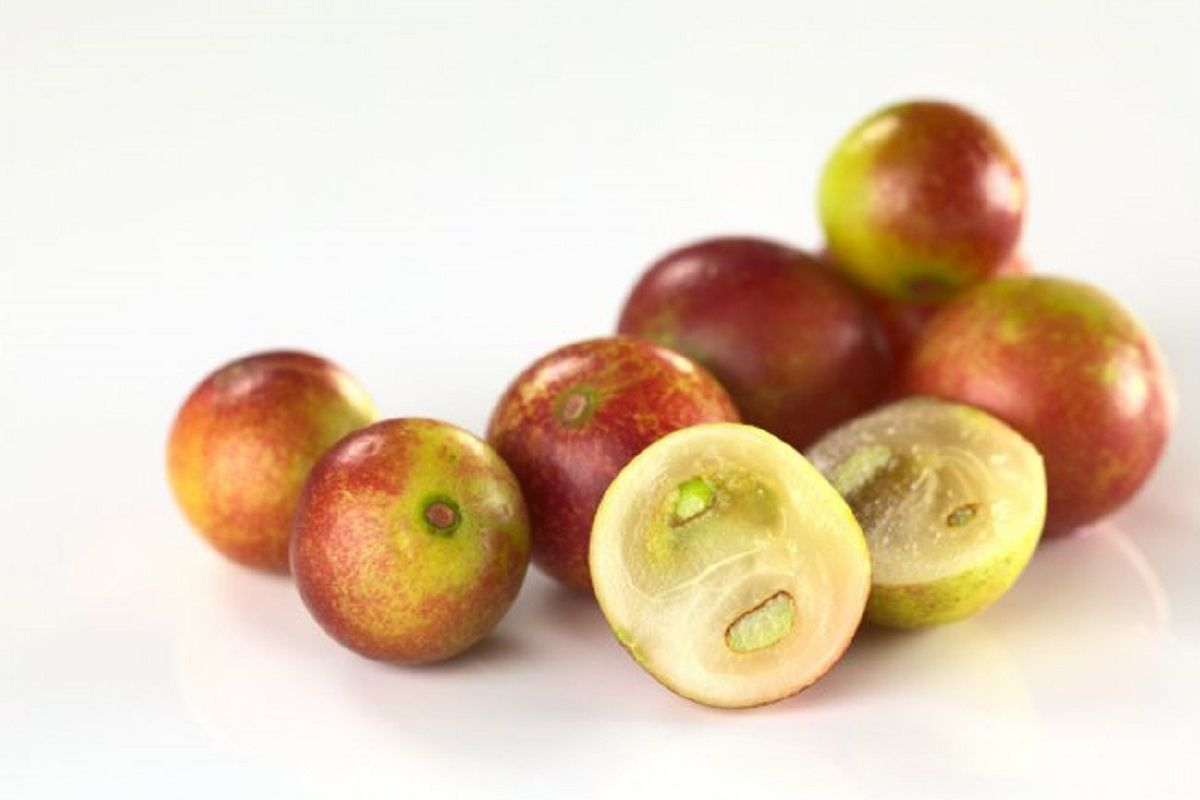 Camu camu: what are the benefits of this anti-inflammatory fruit? | The State