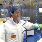 China's 'bat woman' reveals new tests which suggest coronavirus did NOT originate at her Wuhan lab