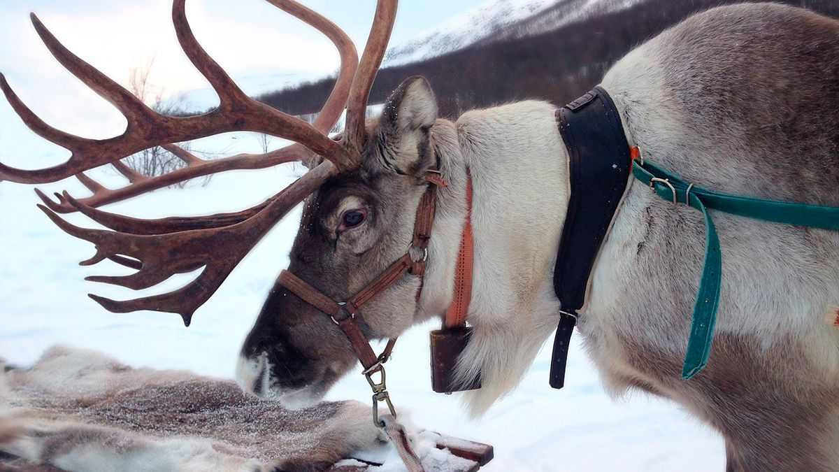 Colorado Brewery to Deliver Free Beer Delivery on a Reindeer Sleigh | The State