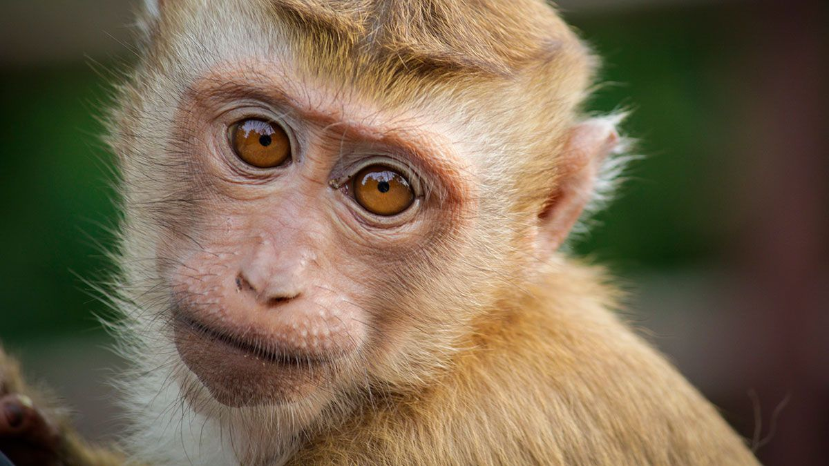 Target stops selling Chaokoh coconut milk for monkey farm | The State