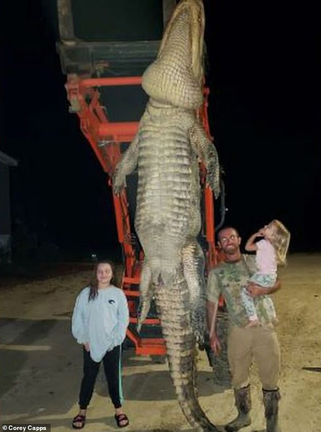 Florida fisherman catches whopping 13-foot, 1,000-pound alligator he says 'stalked' him for years