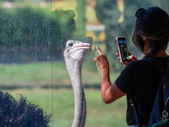 Great weather, 2,500 animals and experiences galore – why Dubai Safari Park is a must visit now
