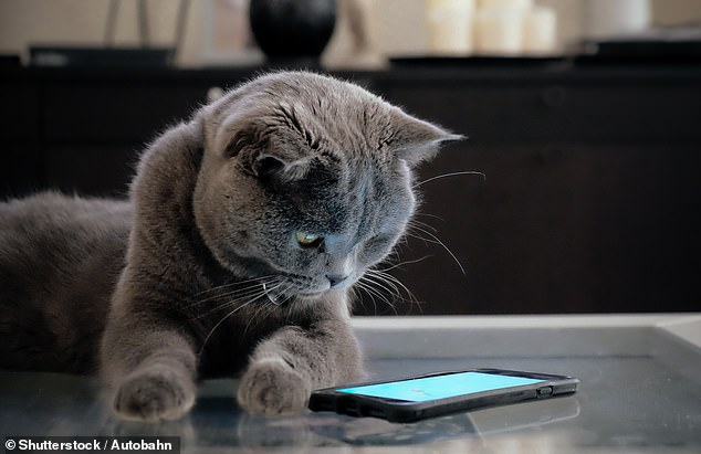 Inventors of new app claim it can translate what your CAT is saying when it purrs