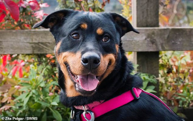 Man, 23, banned from keeping pets for verbally abusing his Rottweiler